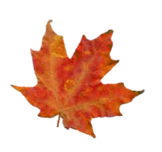 herfstblad